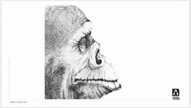 monkey_002