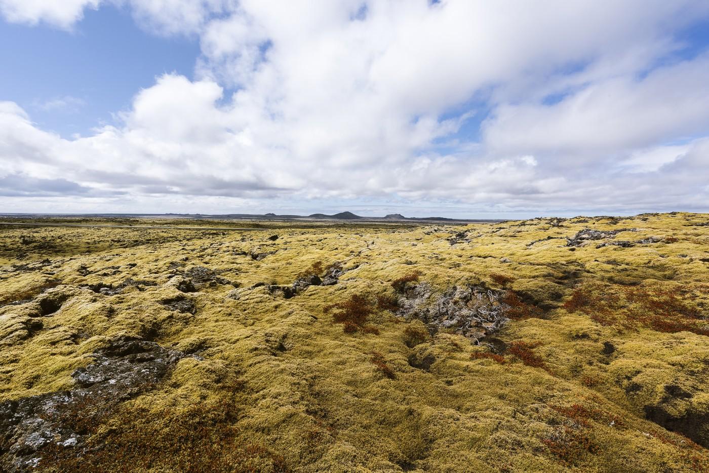 Iceland fields