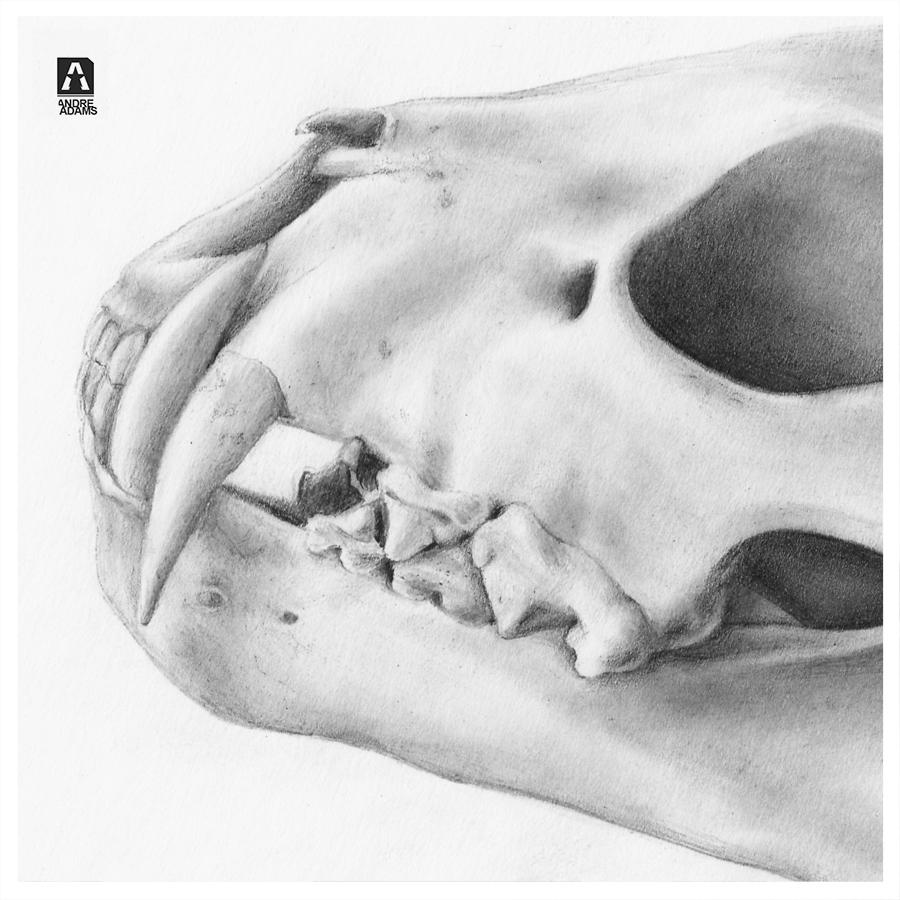 Animal Skull Detail 01