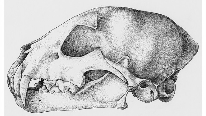 animalSkull Pointillism