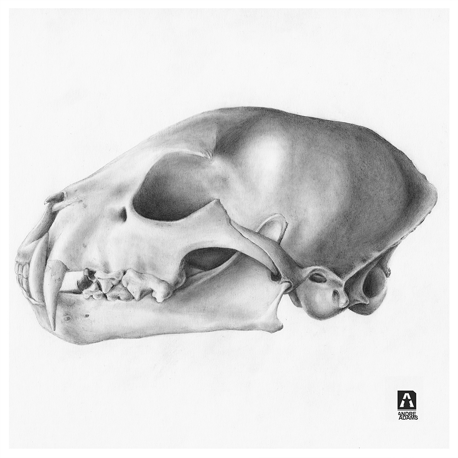 animalSkull